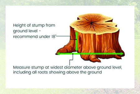 Measure Stumps